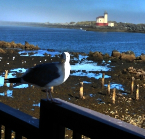 Stanley on the railing of Lighthouse B&B