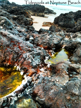 Tidepools at Neptune Beach