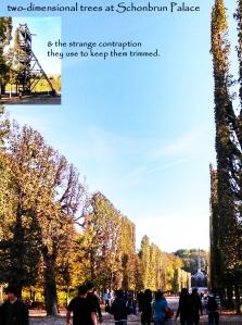 Schonbrun trees