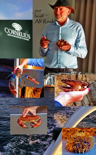4-bergen-cornelius-2