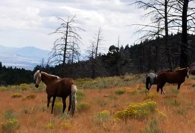Aug 25 - free range horses