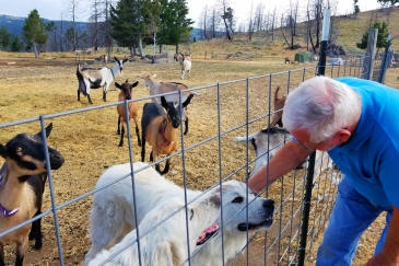 Aug 25 - G with Heidi, Tyr and goats