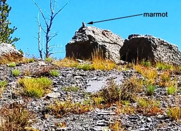 Aug 29 -marmot on a rock